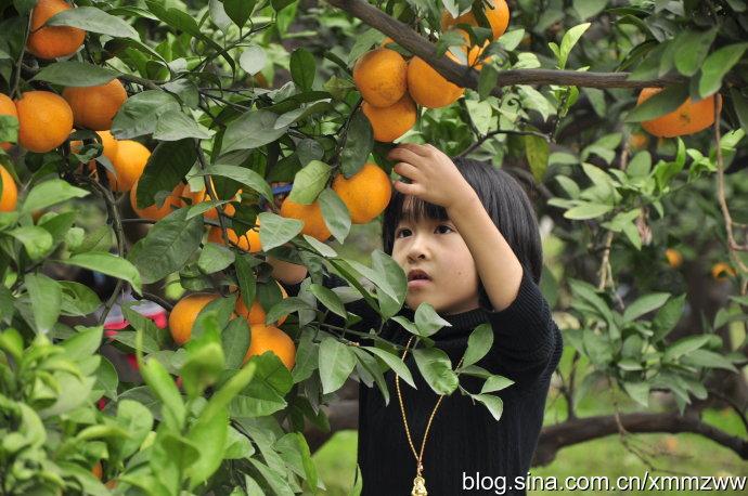 长沙聚龙湾葡萄农庄吃玩68元/人 摘桔子预定0731-83588339